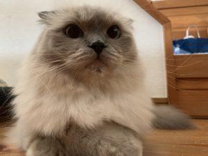猫の顎ニキビ